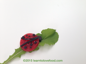 licorice ladybug on a lettuce leaf